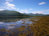 Seaweed and lovely views near the top of Loch Eil